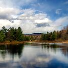 Pillsbury State Park by Monica M. Scanlan