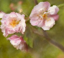 Fleurs de trios by Laura  Knight