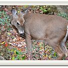 Coy Deer by Imagery