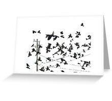 Bird In Red Greeting Card