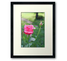 Rose and Bud Framed Print