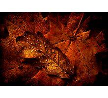 Autumn Shades Photographic Print