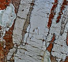 Tree Bark Abstract by Gerda Grice