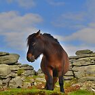 Dartmoor: 'This is my Best Side' by Rob Parsons