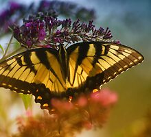 """Tiger Swallowtail """"1"""" by Marcus Baker"""
