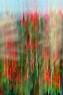 Garden Abstract by goddarb
