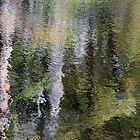 Cypress by Kirstyshots