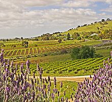 View from Bethany - Barossa Valley by TonyCrehan