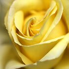 Yellow Rose - Iphone Cover by Joy Watson