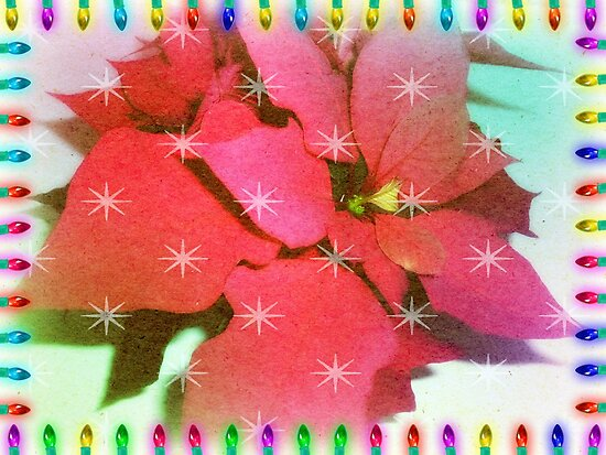 Poinsettia for Christmas by EdsMum