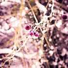 clusters (feeling pink) by ARIANA1985