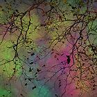 Autumn Colors by by M LaCroix