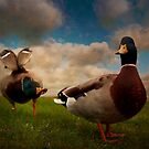 Quackers by ajgosling