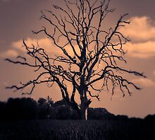 Stand Alone Amongst Hope by NickDuB