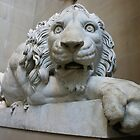 Lion at Chatsworth by Scott Read