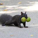 Nuts by Alinka