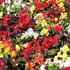 Summer flowers in the park, for iPhone by Philip Mitchell