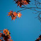 Red Leaves by Joanne Piechota