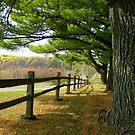 Autumn Beneath The Pines by wiscbackroadz