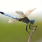 Amazing Blue Dasher by William Brennan