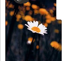 A Daisy Alone IPH by Seth  Weaver