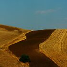 Sicily. Fields XXIII. 2011 by Igor Pozdnyakov