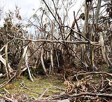Damage from the Ice Storm on Mt Stirling 2011 by Alwyn Simple