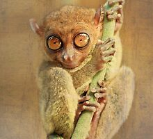 Phillipine tarsier by MotHaiBaPhoto Dmitry & Olga