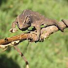 Chameleon 5 by IrinaBudovsky