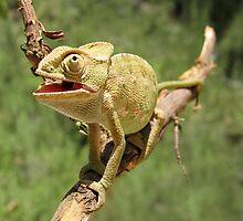 Chameleon 7 by IrinaBudovsky
