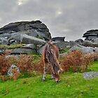 Dartmoor: Pony at Pew Tor by Rob Parsons