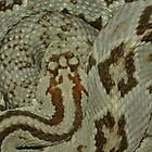 Austin Stevens' Reptiles and Amphibians of the World by Austin Stevens