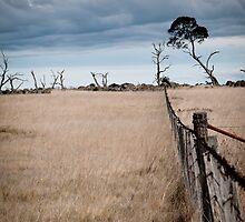 Berridale Fenceline by SteveB54