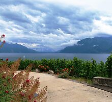 Vineyards on the lake Leman (4) by GOSIA GRZYBEK