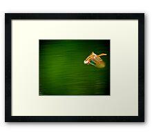 Duck motion Framed Print