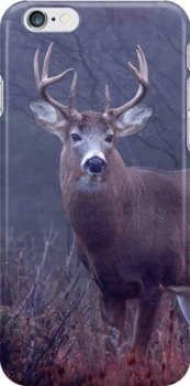 iPhone Case - Buck 1 by Jim Cumming