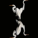 iPhone Case - Great Egrets by Jim Cumming