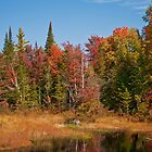 Fall Adirondack Swamp by mlaprade