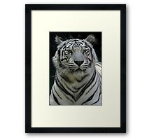 Ivory ..why doesn't everybody leave me alone  Framed Print