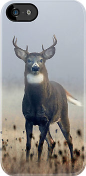 iPhone Case - Buck 3 by Jim Cumming