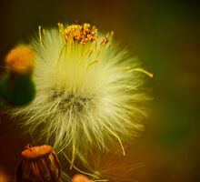 Fluffy by Andre Faubert