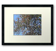 """IL BIANCOSPINO ...un'albero secolare! Italy .................per anna """"anaisanais"""" come rappresentante di tutte le madri che hanno perso un figlio ! Framed Print"""