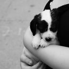Little Black Nose Pup by Kristy Evans