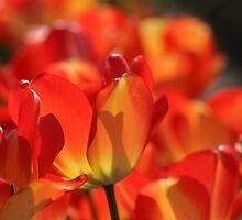 Orange Tulips by Debbie Stika