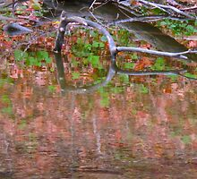 Autumn pools of colour by MarianBendeth
