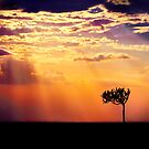 Sunset Over Masai Mara IV [Print &amp; iPad Case] by Damienne Bingham