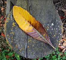 Mare Island Leaf on Seat by RWhitfield