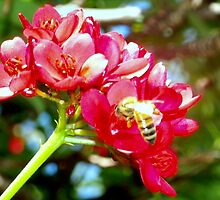 Bee on red flowers. by ♥⊱ B. Randi Bailey