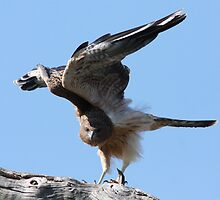 Ready for Take-Off by Phillip Weyers