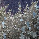 Rock Lichen  by pbclarke